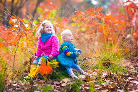 acorn tree: Girl and boy hold acorn and colorful leaf in autumn park. Child picking acorns in a bucket in fall forest with golden oak and maple leaves. Children play outdoors. Kids playing and hiking in the woods