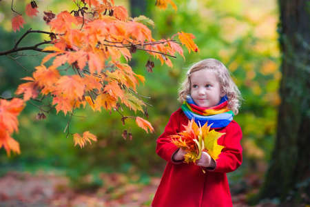 autumn in the park: Little girl with yellow leaf. Child playing with autumn golden leaves. Kids play outdoors in the park. Children hiking in fall forest. Toddler kid under a maple tree on a sunny October day. Stock Photo