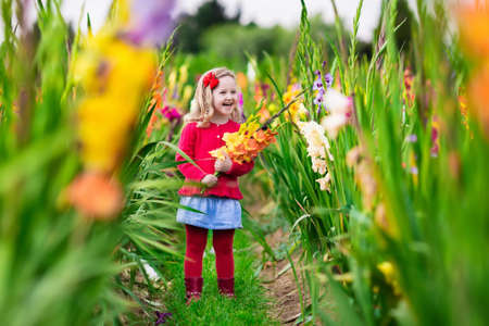 gladiolus: Little girl holding gladiolus flower bouquet. Child picking fresh flowers in the garden. Children gardening in autumn. Kids play in blooming field in late summer or early fall. Kid discovering nature.