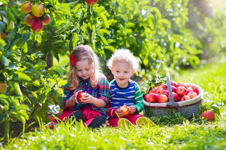 pomme rouge: Enfant cueillir des pommes dans une ferme à l'automne. Petite fille et garçon jouant dans pommier verger. Les enfants ramassent des fruits dans un panier. Toddler manger des fruits à la récolte. Plaisir en plein air pour les enfants. Alimentation saine. Banque d'images