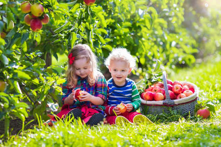 gemelos niÑo y niÑa: Niño recogiendo manzanas en una granja en otoño. Niña y niño jugando en el huerto de manzano. Los niños recogen la fruta en una cesta. Niño que come las frutas en la cosecha. Diversión al aire libre para los niños. Nutrición saludable. Foto de archivo