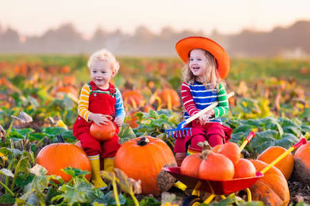 dynia: Little girl and boy picking pumpkins on Halloween pumpkin patch. Children playing in field of squash. Kids pick ripe vegetables on a farm in Thanksgiving holiday season. Family having fun in autumn.