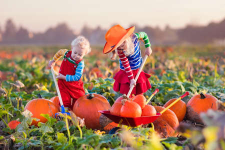 fun: Little girl and boy picking pumpkins on Halloween pumpkin patch. Children playing in field of squash. Kids pick ripe vegetables on a farm in Thanksgiving holiday season. Family having fun in autumn.