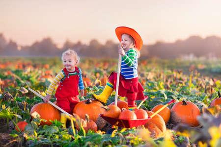 Mała dziewczynka i chłopiec zbieranie dynie na Halloween dyni poprawki. Dzieci bawiące się w polu gry w squasha. Dzieci wybrać dojrzałe warzywa na farmie w Święto Dziękczynienia sezonie. Rodzina zabawy w jesieni. Zdjęcie Seryjne