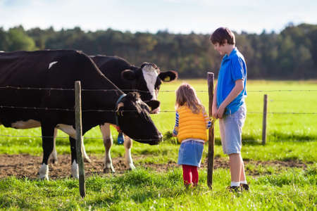 Happy kids feeding cows on a farm. Little girl and school age boy feed cow on a country field in summer. Farmer children play with animals. Child and animal friendship. Family fun in the countryside.