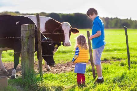 Gelukkige kinderen voeden koeien op een boerderij. Meisje en schoolgaande leeftijd jongen voeden koe op een veld land in de zomer. Boer kinderen spelen met dieren. Kind en dier vriendschap. Familie plezier op het platteland.