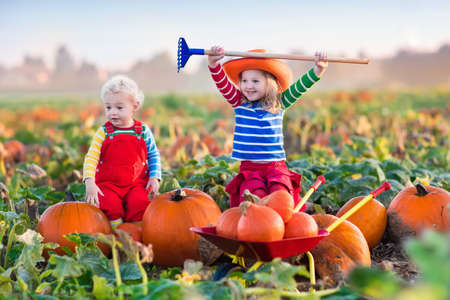 the patch: Little girl and boy picking pumpkins on Halloween pumpkin patch. Children playing in field of squash. Kids pick ripe vegetables on a farm in Thanksgiving holiday season. Family having fun in autumn.