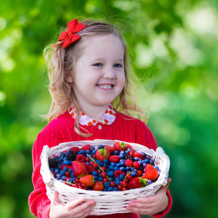 Child picking berries on a farm. Little girl eating strawberry, raspberry, blueberry, blackberry, red and black currant. Kids eat berry. Healthy nutrition for children. Toddler kid with fruit basket. 版權商用圖片