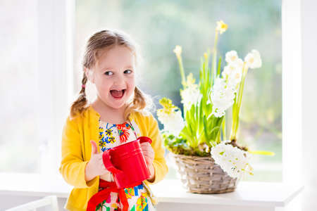 sunny season: Cute girl watering first spring flowers. Easter home interior and decoration. Child taking care of plants. Kid with water can. Toddler with flower basket. Little gardener with hyacinths and daffodils.