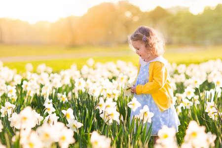 水仙の花畑で遊ぶ幼児の女の子。ガーデニングの子。子供の家の裏庭に花を摘みします。子供たちは庭での作業します。植物の世話の子供。春の最