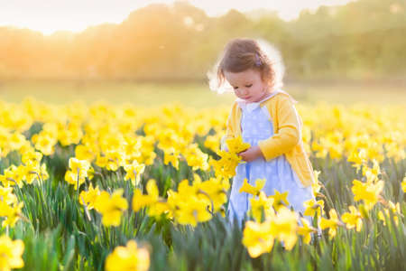 Toddler girl playing in daffodil flower field. Child gardening. Kid picking flowers in the backyard. Children working in the garden. Kids taking care of plants. First spring blossoms. Easter egg hunt.