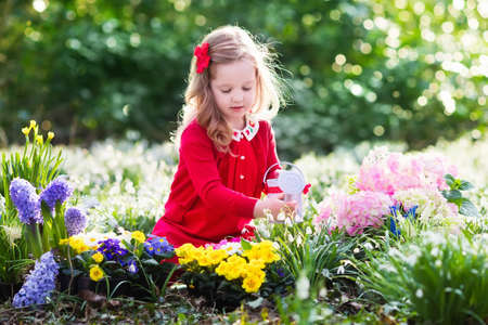 Child planting spring flowers in sunny garden. Little girl gardener plants hyacinth, daffodil, snowdrop in flower bed. Gardening tools and water can for kids. Family with children work in the backyard.