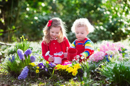 Children planting spring flowers in sunny garden. Little boy and girl gardener plant hyacinth, daffodil, snowdrop in flower bed. Gardening tools and water can for kids. Family working in the backyard.