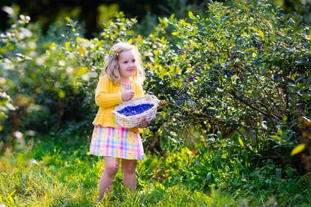 comiendo frutas: Niños recogiendo bayas frescas en el campo de arándanos. Los niños captan baya azul en granja orgánica. Niña que juega al aire libre en huerto de frutales. La agricultura del niño. Jardinería niño en edad preescolar. Diversión familiar de Verano.