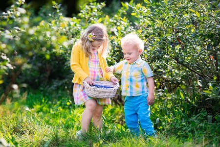 baby boy: Kids picking fresh berries on blueberry field. Children pick blue berry on organic farm. Little girl and baby boy play outdoors in fruit orchard. Toddler and preschooler gardening. Summer family fun.
