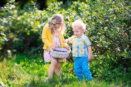gemelos niÑo y niÑa: Los niños de recolección de frutas frescas en el campo de arándanos. Los niños captan la baya azul en la granja orgánica. La niña y del bebé juegan al aire libre en el huerto de frutales. Niño en edad preescolar y la jardinería. diversión de la familia del verano.