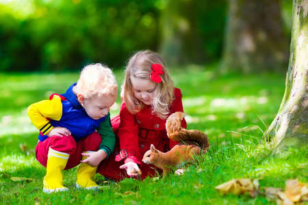 acorn squirrel: Kids feeding squirrel in autumn park. Little boy and girl in red coat and rain boots watch wild animals in fall forest with golden oak and maple leaves. Children play outdoors. Kids playing with pets