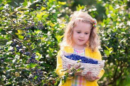 niña comiendo: Niños recogiendo bayas frescas en el campo de arándanos. Los niños captan baya azul en granja orgánica. Niña que juega al aire libre en huerto de frutales. La agricultura del niño. Jardinería niño en edad preescolar. Diversión familiar de Verano.
