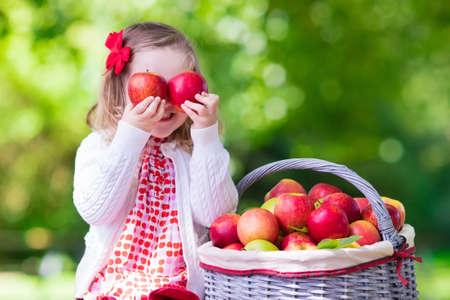 frutas divertidas: Niño recogiendo manzanas en una granja en otoño. Niña que juega en el huerto manzano. Los niños recogen la fruta en una cesta. Niño que come las frutas en la cosecha de otoño. Diversión al aire libre para los niños. Nutrición saludable. Foto de archivo
