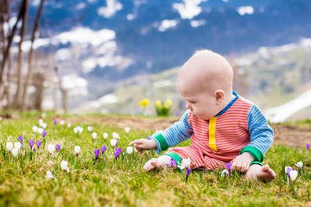 Sun flower: Kleines Baby in den Alpen Berge im Frühjahr mit Krokus Blumen zu spielen. Kind in der Blume mit Schnee bedeckten Berggipfel im Hintergrund Wiese. Frühlingsurlaub in der Schweiz für Familie mit Kind Lizenzfreie Bilder