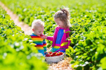 子供たちがイチゴを選択します。有機イチゴの農場でフルーツを拾う子供たち。庭いじりをし、収穫の子供。幼児子供と赤ちゃんは、健全な熟した