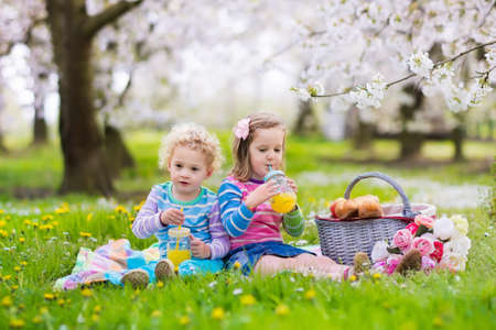 picnic blanket: Little children eating lunch outdoors. Kids with picnic basket in spring garden with blooming apple and cherry tree. Preschooler girl, toddler boy and baby eat and drink in summer park on blanket.