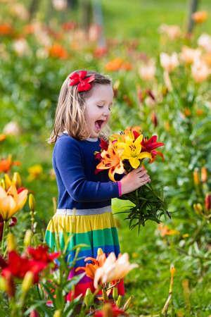 mignonne petite fille: Cute petite fille cueillant des fleurs de lys en floraison jardin d'été. Enfant tenant lys bouquet dans un beau champ de fleurs. jardinage Kid. plantes Lilium dans le lit de fleurs. Préscolaire sent les fleurs cueillies.
