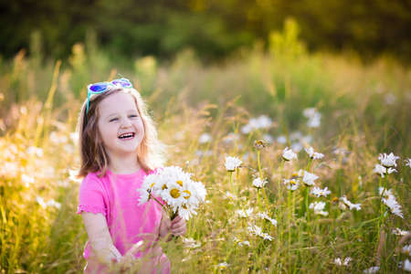 golden daisy: Child picking wild daisy flowers in field. Kids play in a meadow and pick flower bouquet on summer day. Toddler girl outdoors in spring.