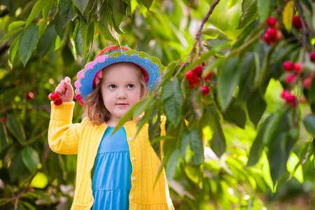 frutas divertidas: Kids picking cherry on a fruit farm. Children pick cherries in summer orchard. Toddler kid eating fresh fruit from garden tree. Little farmer girl with berry in a basket. Harvest time fun for family Foto de archivo