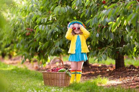 Kids picking cherry on a fruit farm. Children pick cherries in summer orchard. Toddler kid eating fresh fruit from garden tree. Little farmer girl with berry in a basket. Harvest time fun for family Stock Photo