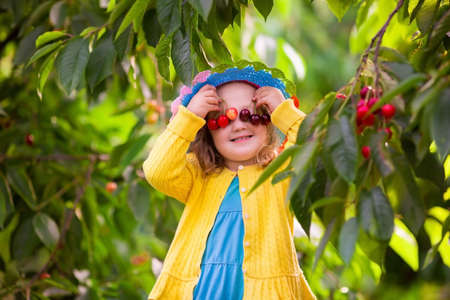 frutas divertidas: Niños recogiendo cerezas en una granja de frutas. Los niños recogen cerezas en la huerta de verano. Chico Niño que come fruta fresca de árbol del jardín. Chica agricultor pequeño con bayas en una cesta. Tiempo de cosecha diversión para la familia