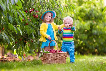 Kinderen plukken kersen op een fruitboerderij. Kinderen plukken kersen in de zomerboomgaard. Peuter kind en baby eten vers fruit uit tuinboom. Meisje en jongen die bes eten in een mand. Oogstijd leuk voor familie Stockfoto