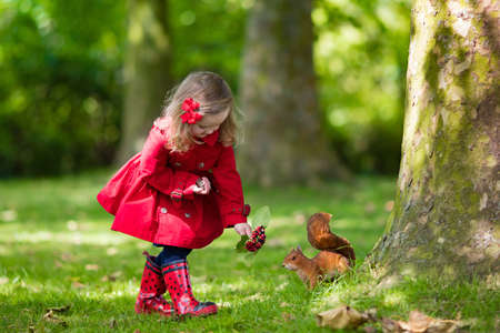 red animal: Girl feeding squirrel in autumn park. Little girl in red trench coat and rain boots watching wild animal in fall forest with golden oak and maple leaves. Children play outdoors. Kids playing with pets Stock Photo