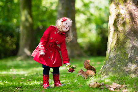 animal watching: Girl feeding squirrel in autumn park. Little girl in red trench coat and rain boots watching wild animal in fall forest with golden oak and maple leaves. Children play outdoors. Kids playing with pets Stock Photo