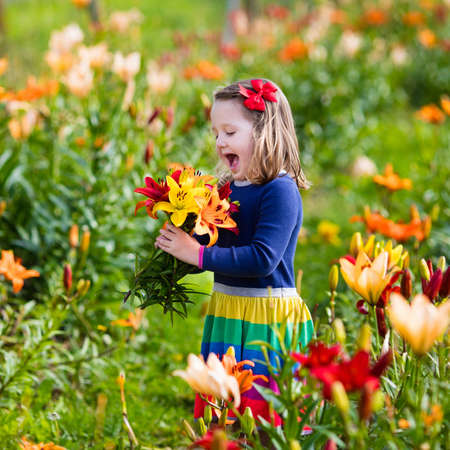 cute little girl: Cute little girl picking lily flowers in blooming summer garden. Child holding lilies bouquet in beautiful flower field. Kid gardening. Lilium plants in flower bed. Preschooler smells picked blossoms.