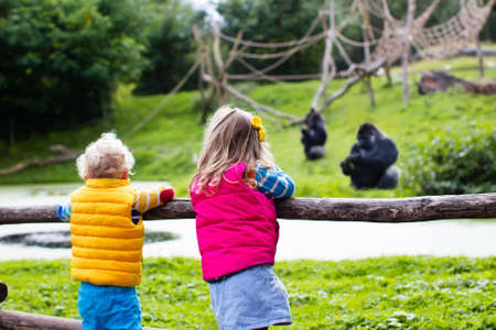 day trip: Two little kids, boy and girl, watch monkey show in the zoo on a cold autumn day. Children watching animals in safari park.