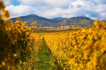 wine road: Beautiful view of Alsace mountain and hill landscape in autumn by sunny weather. Nature of France in fall. Stock Photo