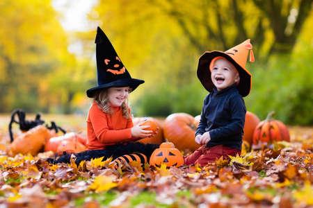 calabazas de halloween: Los niños llevaban trajes de la bruja negro y naranja con sombreros juega con la calabaza y la araña en otoño Parque en Halloween. truco de los niños o de placer. Chico y chica talla calabazas.