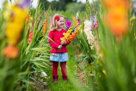 early summer: Little girl holding gladiolus flower bouquet. Child picking fresh flowers in the garden. Children gardening in autumn. Kids play in blooming field in late summer or early fall. Kid discovering nature.