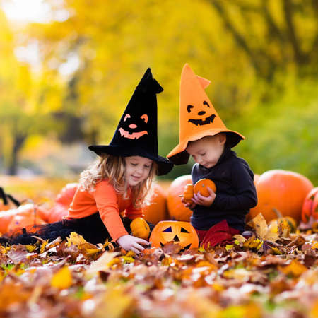 treats: Children wearing black and orange witch costumes with hats playing with pumpkin and spider in autumn Park on Halloween. Kids trick or treat. Boy and girl carving pumpkins.