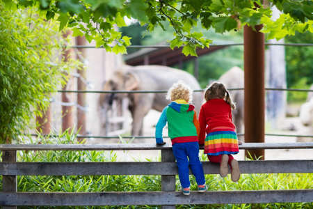 feed: Two children, little toddler boy and preschool girl, brother and sister, watching elephant animals at the zoo on sunny summer day. Wildlife experience for kids at animal safari park.