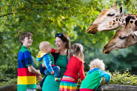 safari animal: Mother and children, school student, little toddler boy, preschool girl and baby watching and feeding giraffe animals at the zoo. Wildlife experience for parents and kids at animal safari park. Stock Photo