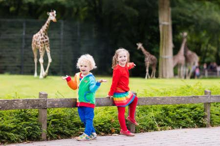 Due bambini, piccolo bambino ragazzo e una ragazza in età prescolare, fratello e sorella, guardando gli animali giraffe allo zoo soleggiata giornata estiva. esperienza della fauna selvatica per i bambini al parco animale di safari. Archivio Fotografico - 61443337
