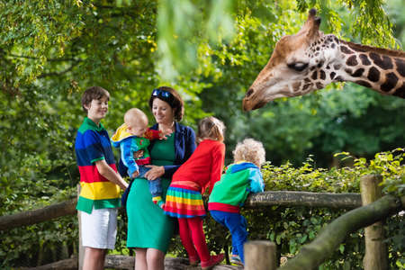 zoo youth: Mother and children, school student, little toddler boy, preschool girl and baby watching and feeding giraffe animals at the zoo. Wildlife experience for parents and kids at animal safari park. Stock Photo