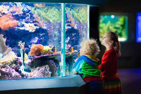 tropical tank: Little boy and girl watching tropical coral fish in large sea life tank. Kids at the zoo aquarium. Stock Photo