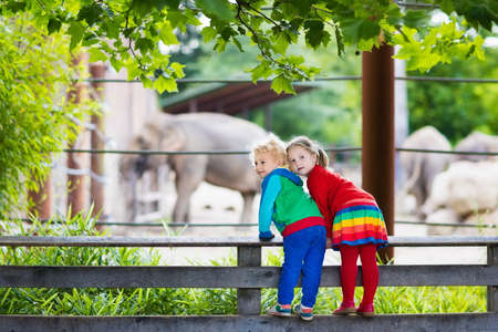 animal watching: Two children, little toddler boy and preschool girl, brother and sister, watching elephant animals at the zoo on sunny summer day. Wildlife experience for kids at animal safari park.