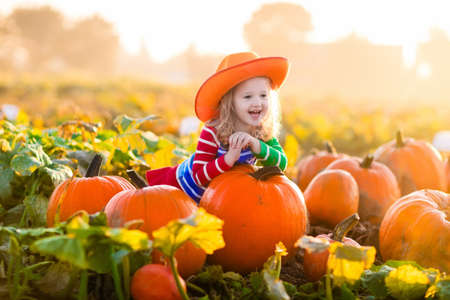 Little girl picking pumpkins on Halloween pumpkin patch. Child playing in field of squash. Kids pick ripe vegetables on a farm in Thanksgiving holiday season. Family with children having fun in autumn Stock Photo