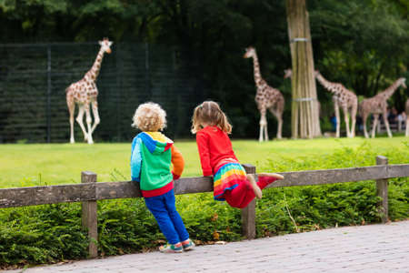 Two children, little toddler boy and preschool girl, brother and sister, watching giraffe animals at the zoo on sunny summer day. Wildlife experience for kids at animal safari park.
