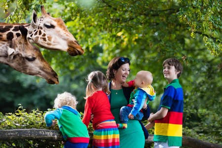 animal watching: Mother and children, school student, little toddler boy, preschool girl and baby watching and feeding giraffe animals at the zoo. Wildlife experience for parents and kids at animal safari park. Stock Photo