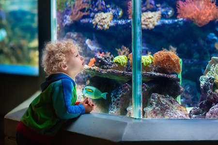 tropical tank: Little boy watching tropical coral fish in large sea life tank. Kids at the zoo aquarium. Stock Photo
